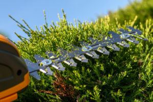 Using a hedge trimmer